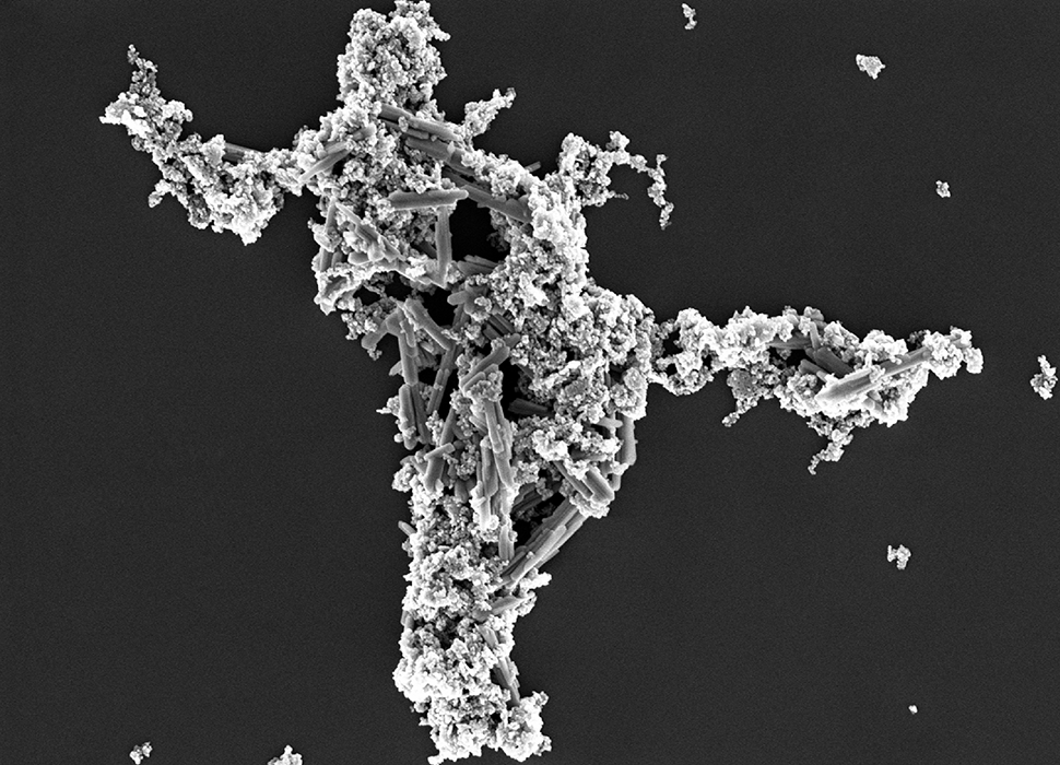 SEM image of a nanoparticle mixture